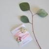 bloom špangica